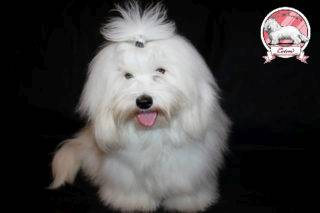 Bellezza Bianco The Sweetest Coton