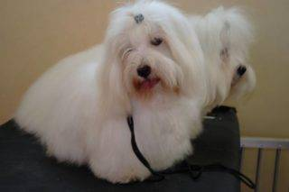 Electra The Sweetest Coton