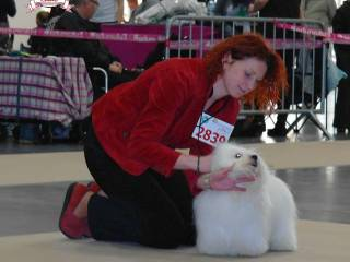 The Sweetest Coton - Polish Winner