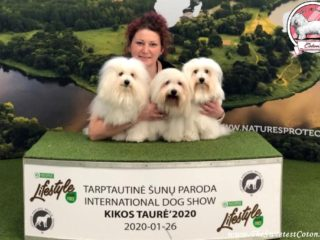 Coton de Tulear in Lithuania 2020