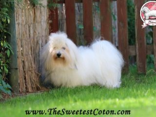 Malaga The Sweetest Coton