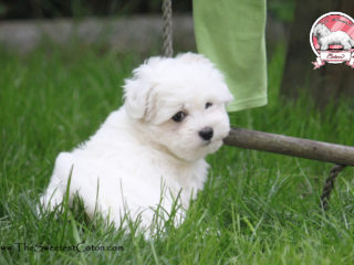 O'Honey The Sweetest Coton